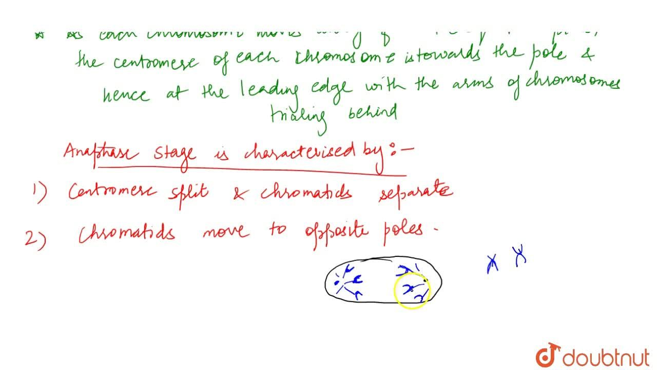 Solution for Anaphase