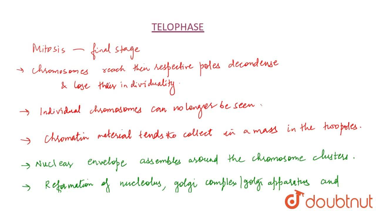 Solution for Telophase