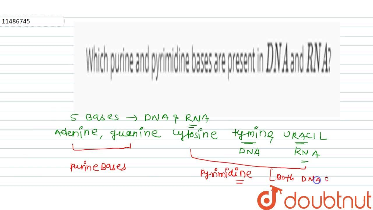 Solution for Which purine and pyrimidine bases are present in