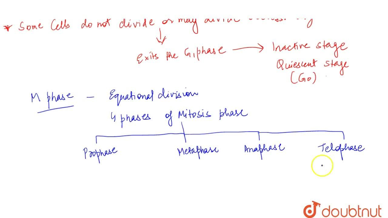 Solution for Phases Of Cell Cycle