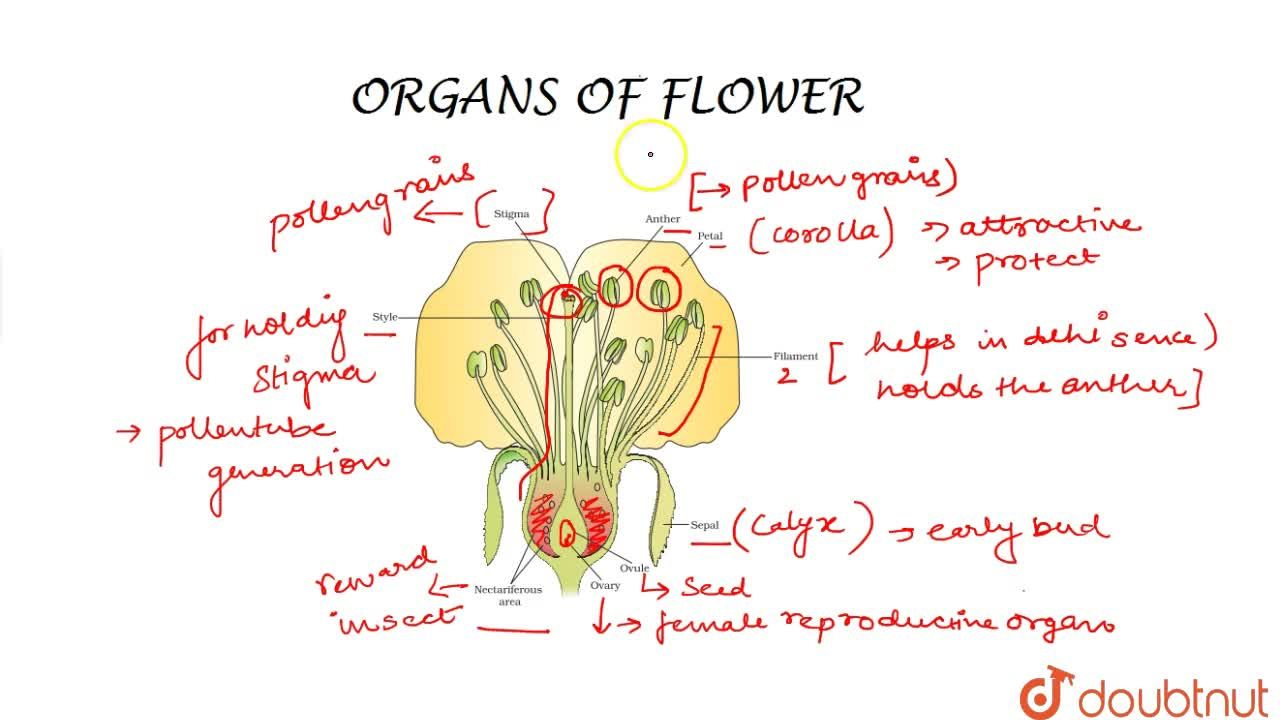 Solution for Different Organs Of Flower