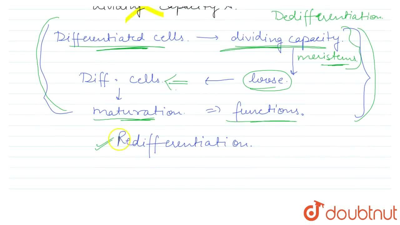 Solution for WHAT IS REDIFFERENTIATION?