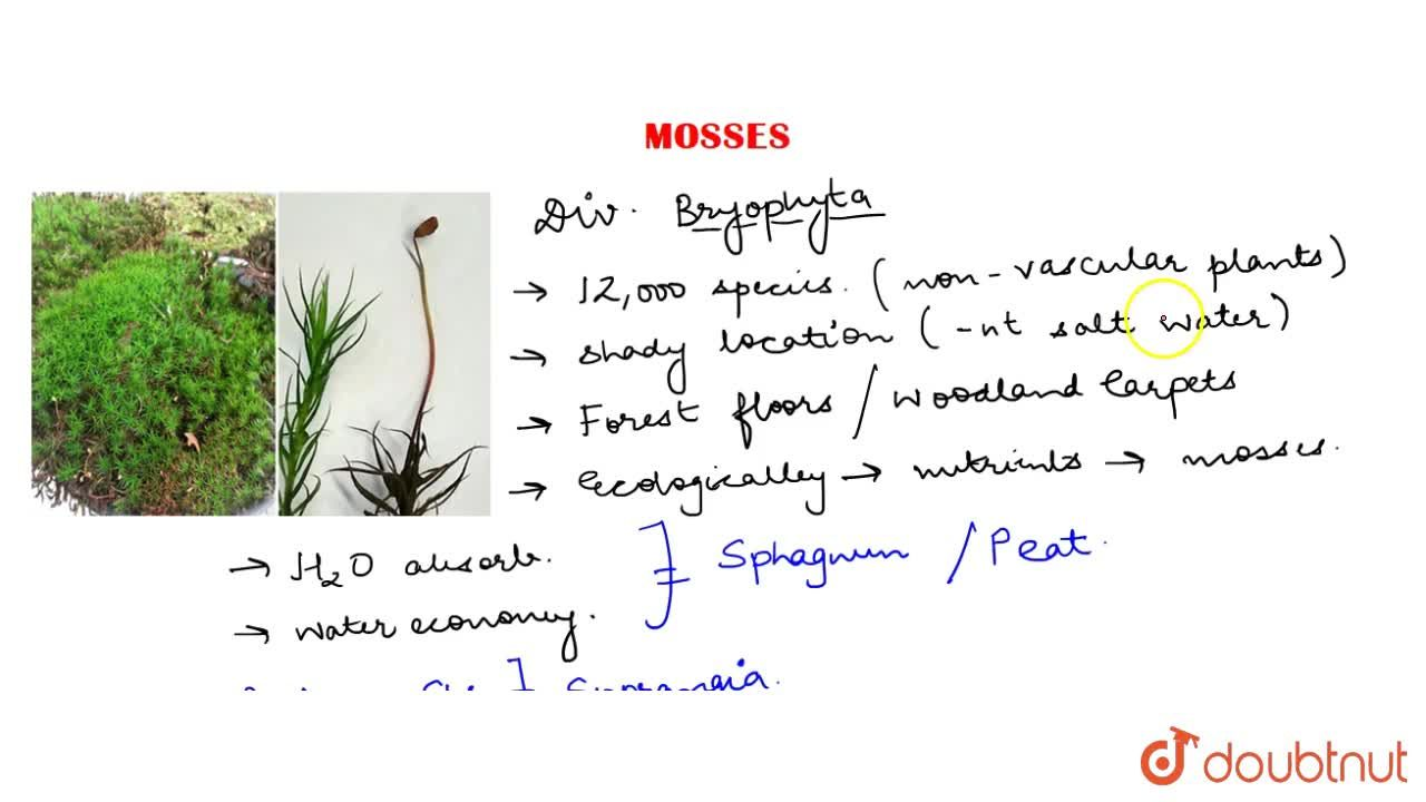 Solution for Mosses