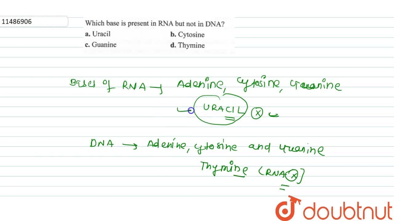 Solution for Which base is present in RNA but not in DNA?
