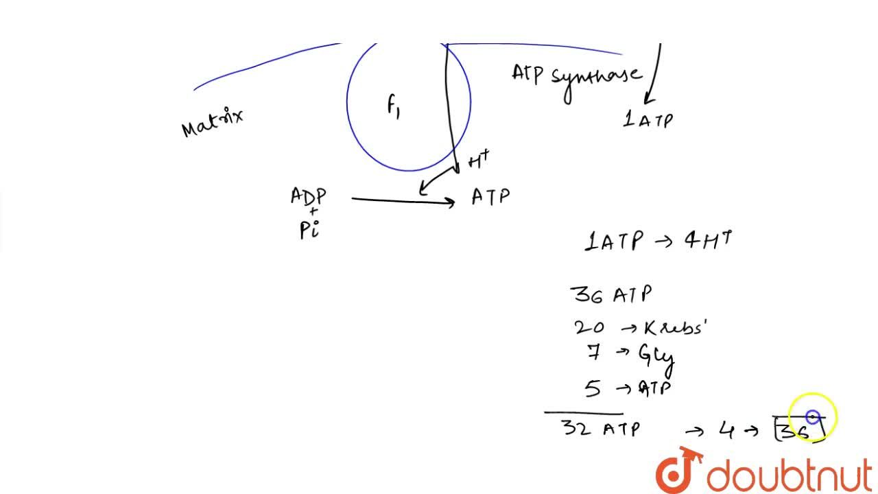 Solution for ELECTRON TRANSPORT SYSTEM (ETS) AND OXIDATIVE PHOS