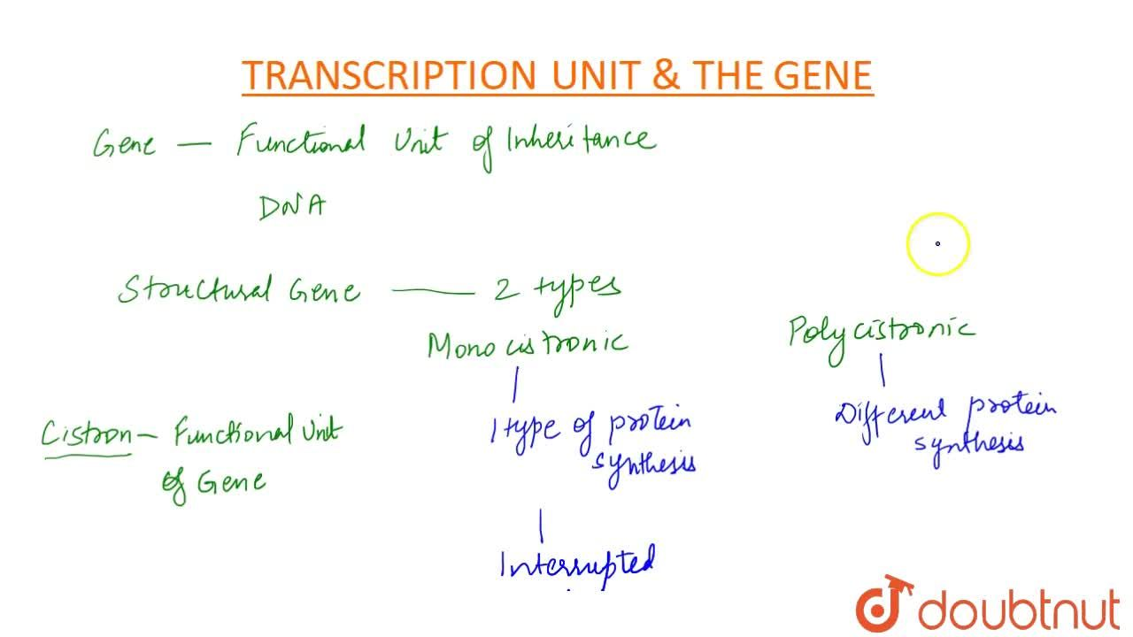 Solution for Transcription Unit And The Gene