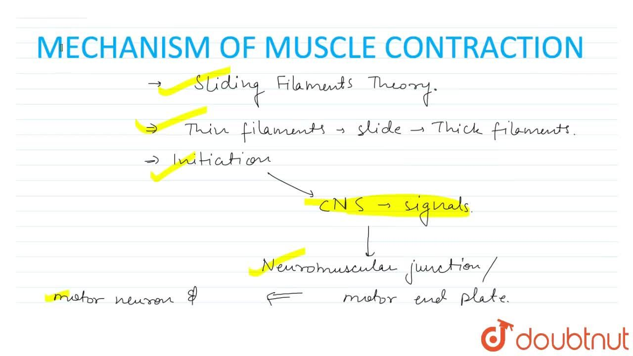 Solution for Mechanism Of Muscle Contraction