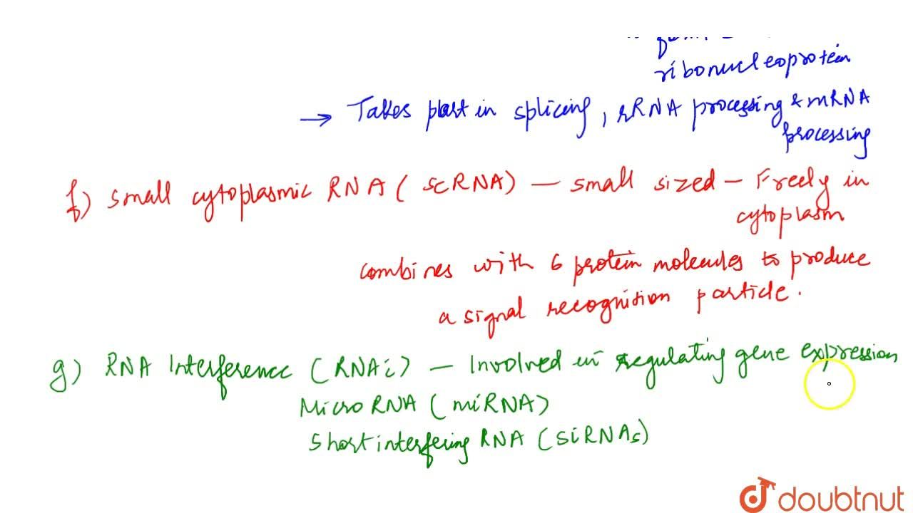 Solution for Types Of Rna And The Process Of Transcription