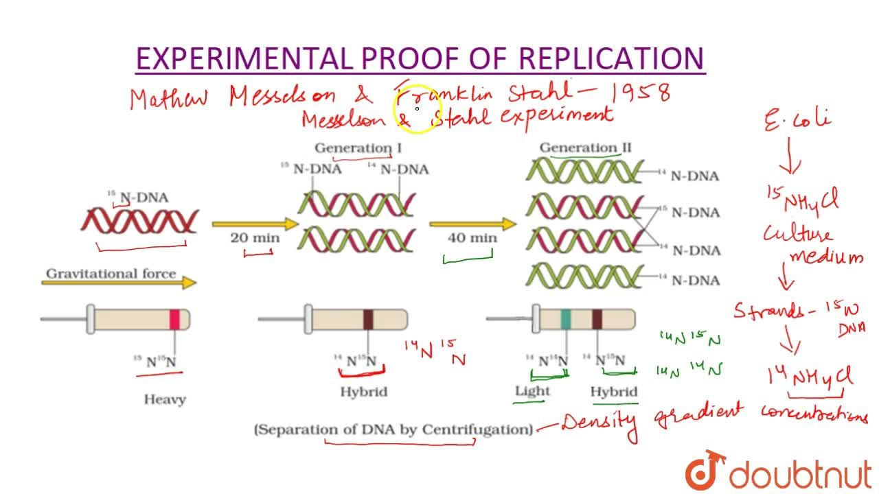 Solution for The Experimental Proof Of Replication