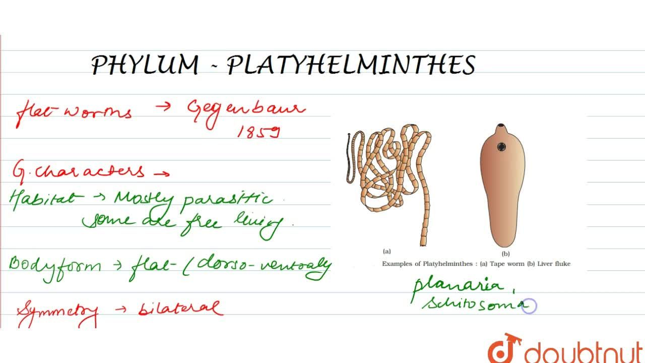 Solution for PHYLUM – PLATYHELMINTHES