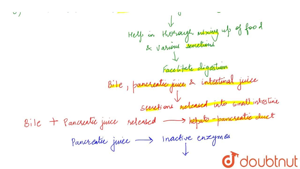 Solution for Chemical Process Of Food Digestion
