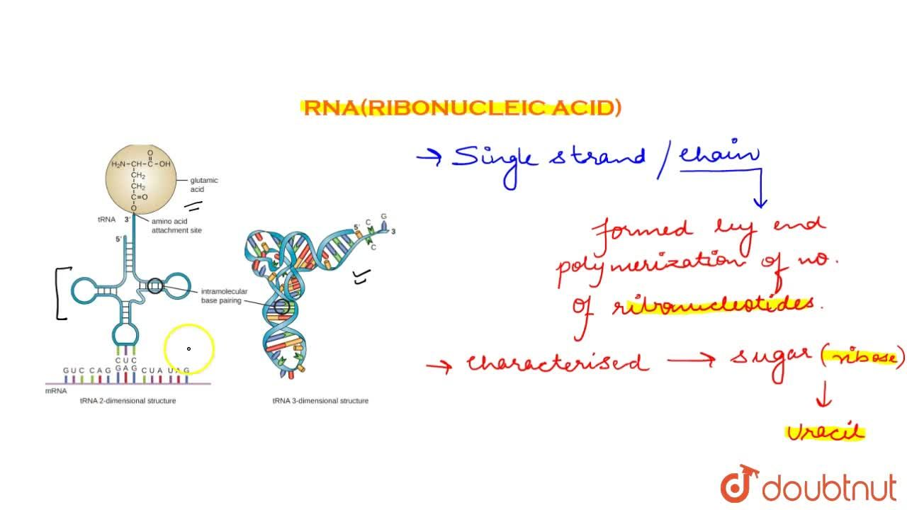 Solution for Rna