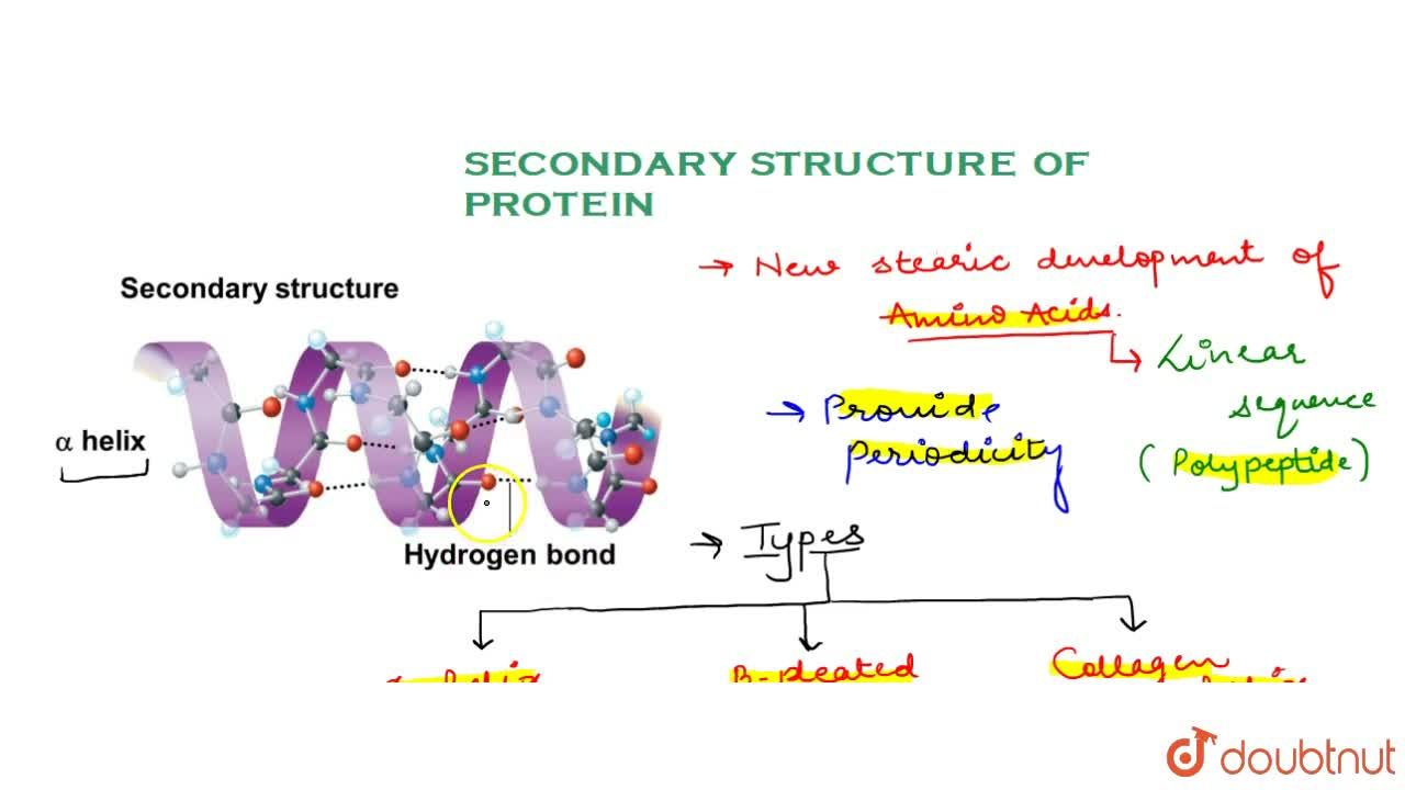 Solution for Secondary Structure Of Protein