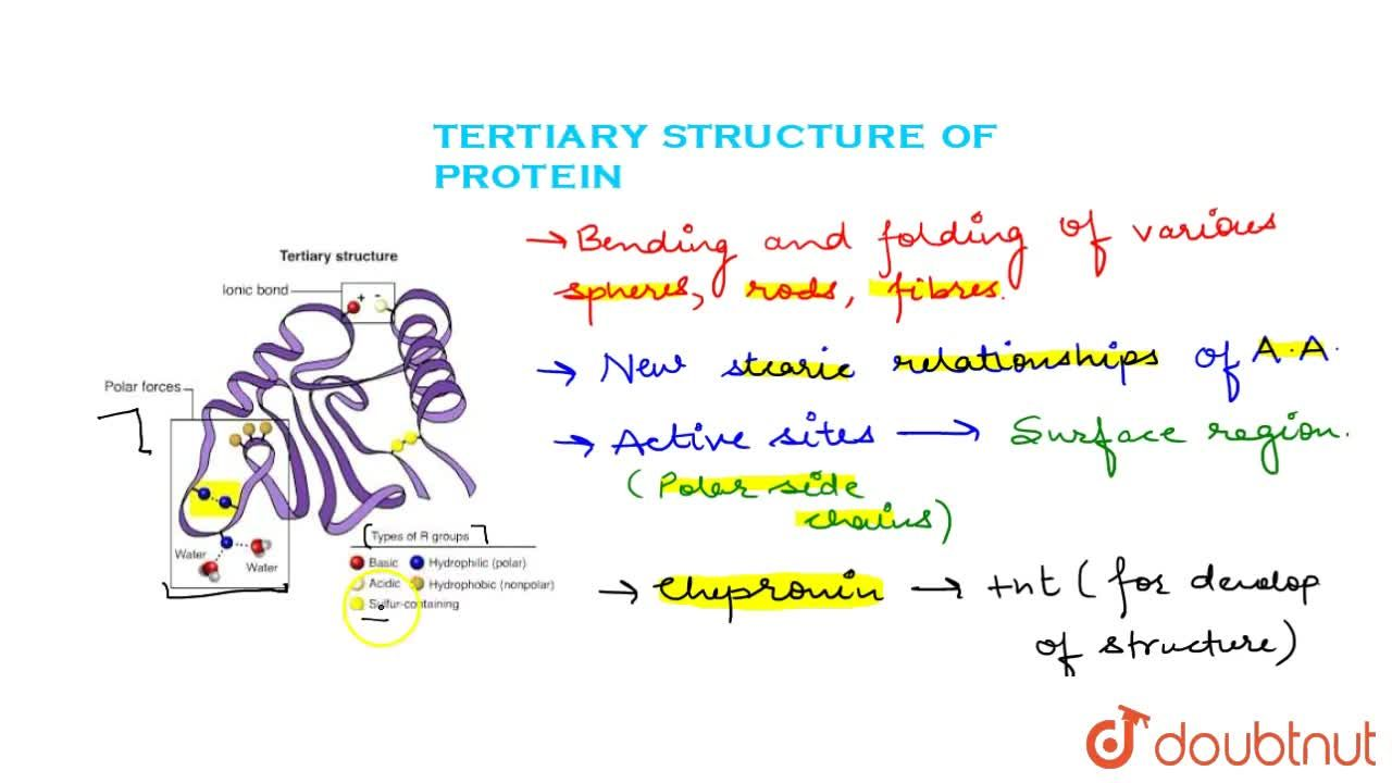 Solution for Tertiary Structure Of Protein
