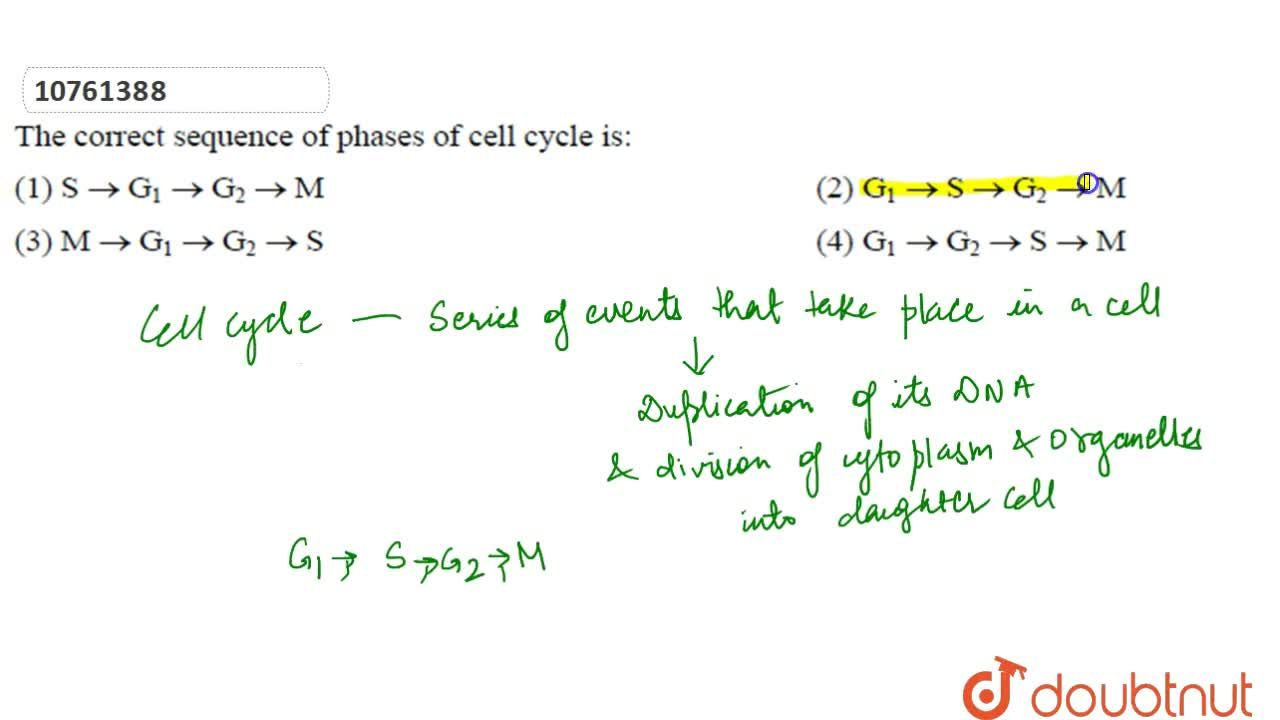 Solution for The correct sequence of phases of cell cycle is :