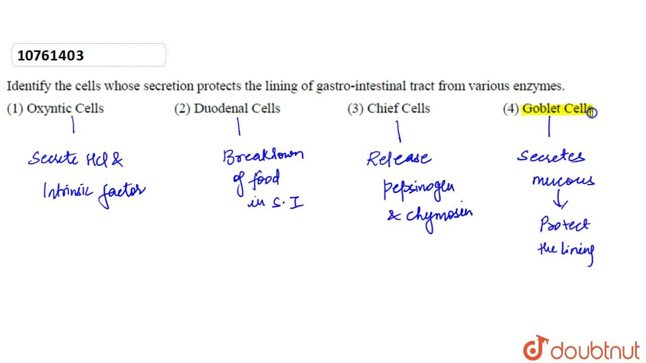 Solution for Identify the cells whose secretion protects the li