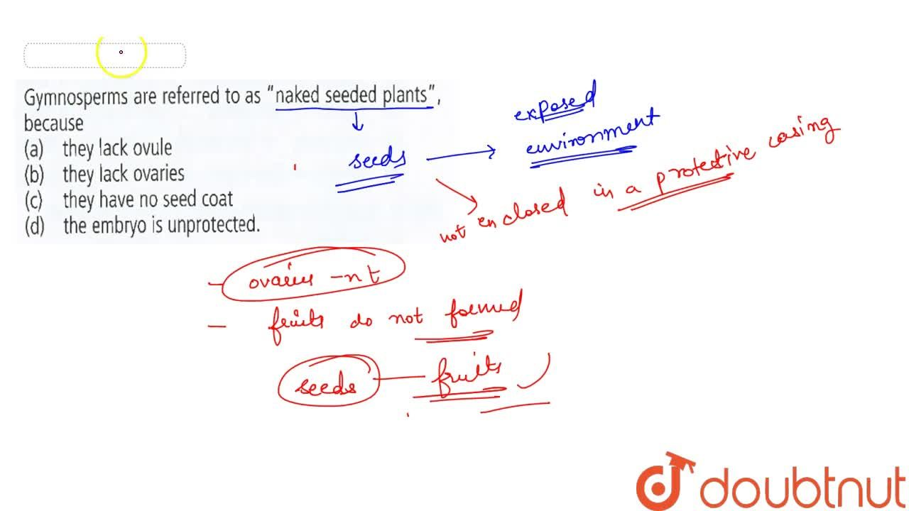 """Solution for Gymnosperms are referred to as """"naked seeded plant"""
