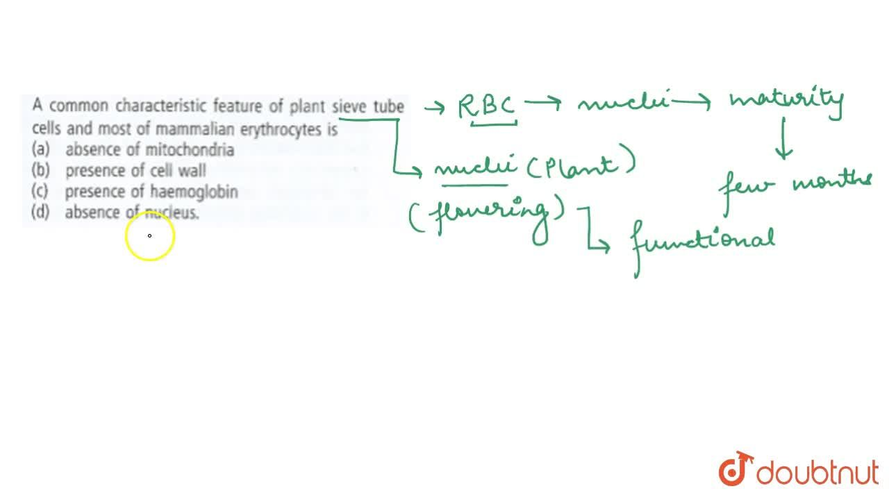 Solution for Which one of the following types of cell is involv