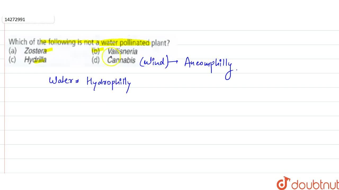 Solution for Which of the following is not a water pollination
