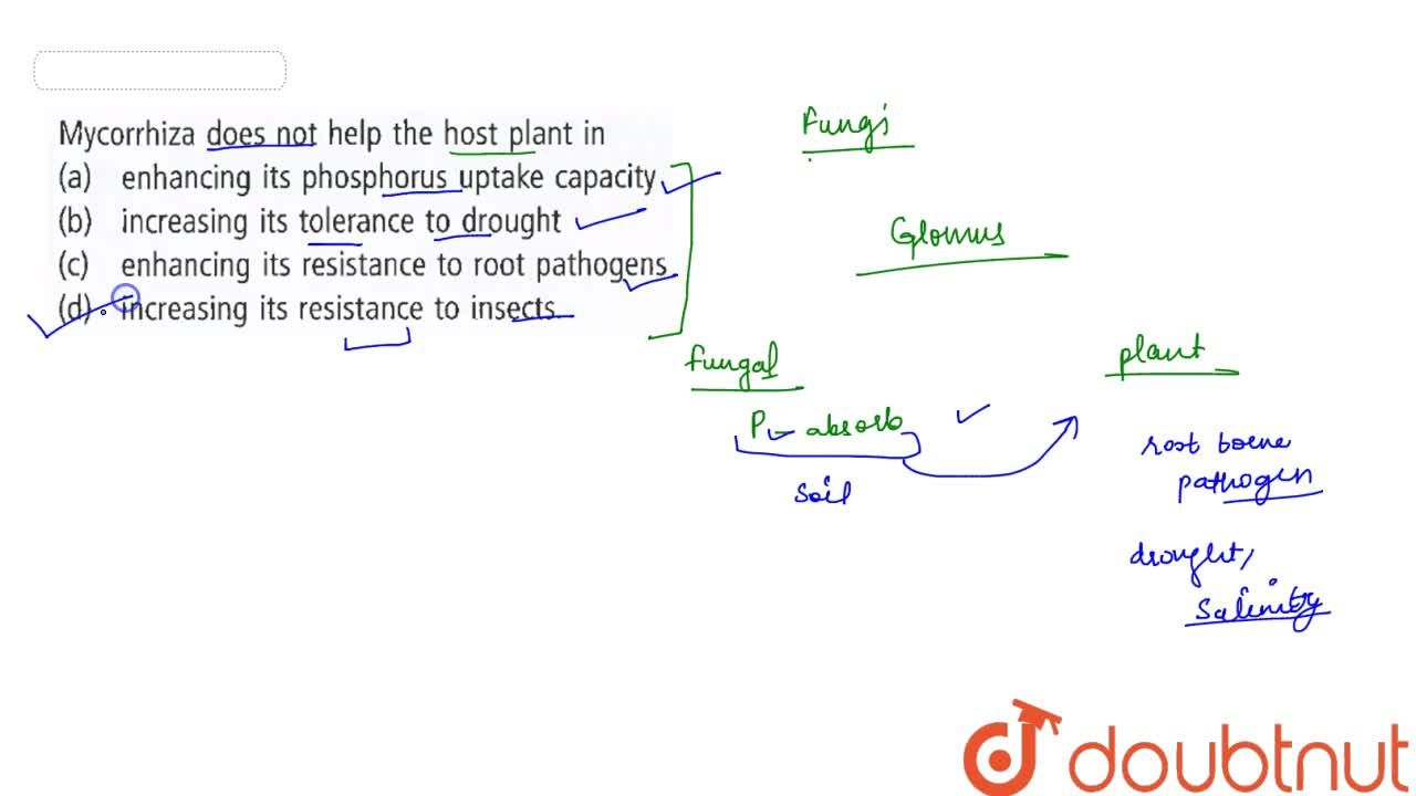 Solution for Mycorrhiza does not help the host plant in
