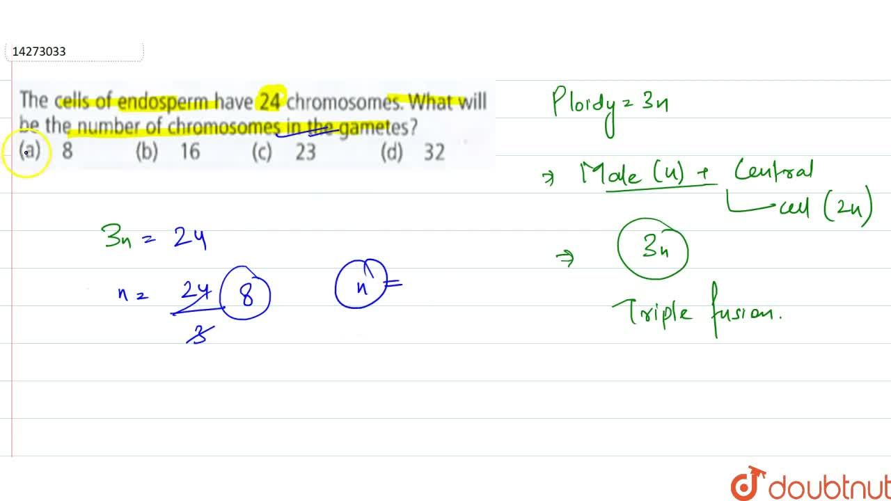 Solution for The cell of endosperm have 24 chromosomes. What wi