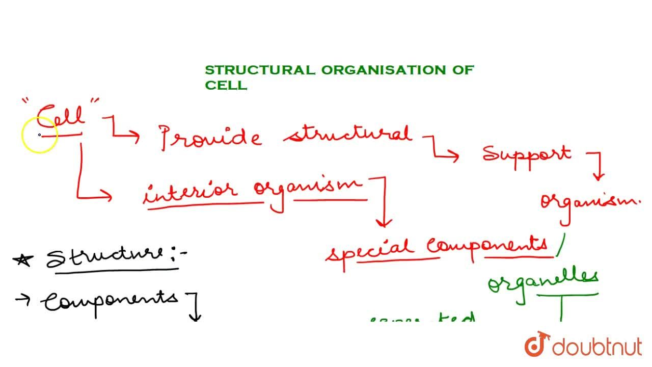 Structural Organisation Of Cell