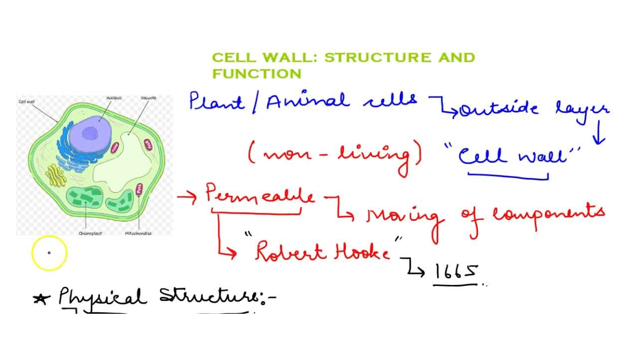 CELL WALL : STRUTURE AND FUNCTION