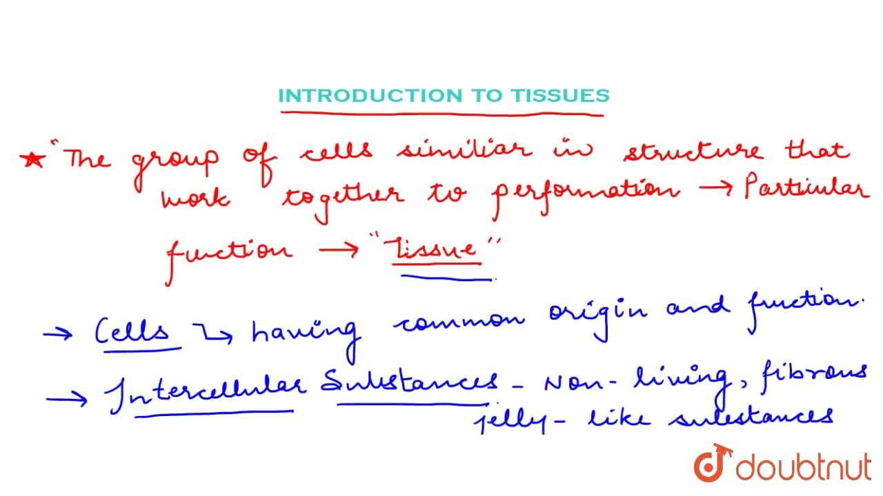 Solution for Introduction To Tissues