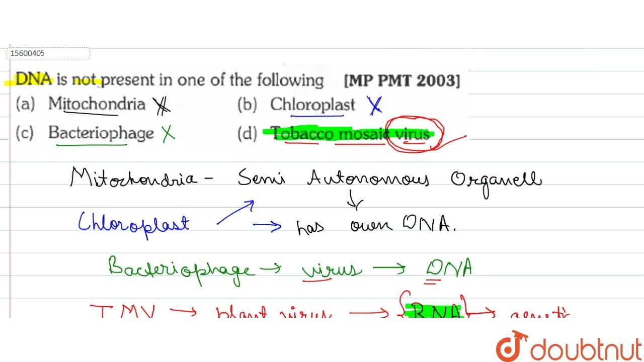 Solution for DNA is not present in one of the following