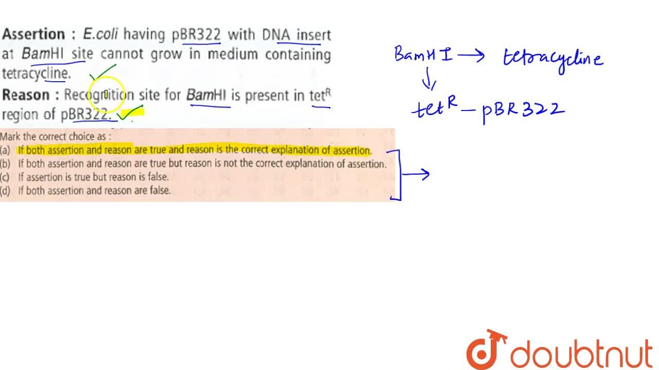 Solution for Assertion : E.coli having pBR322 with DNA insert a