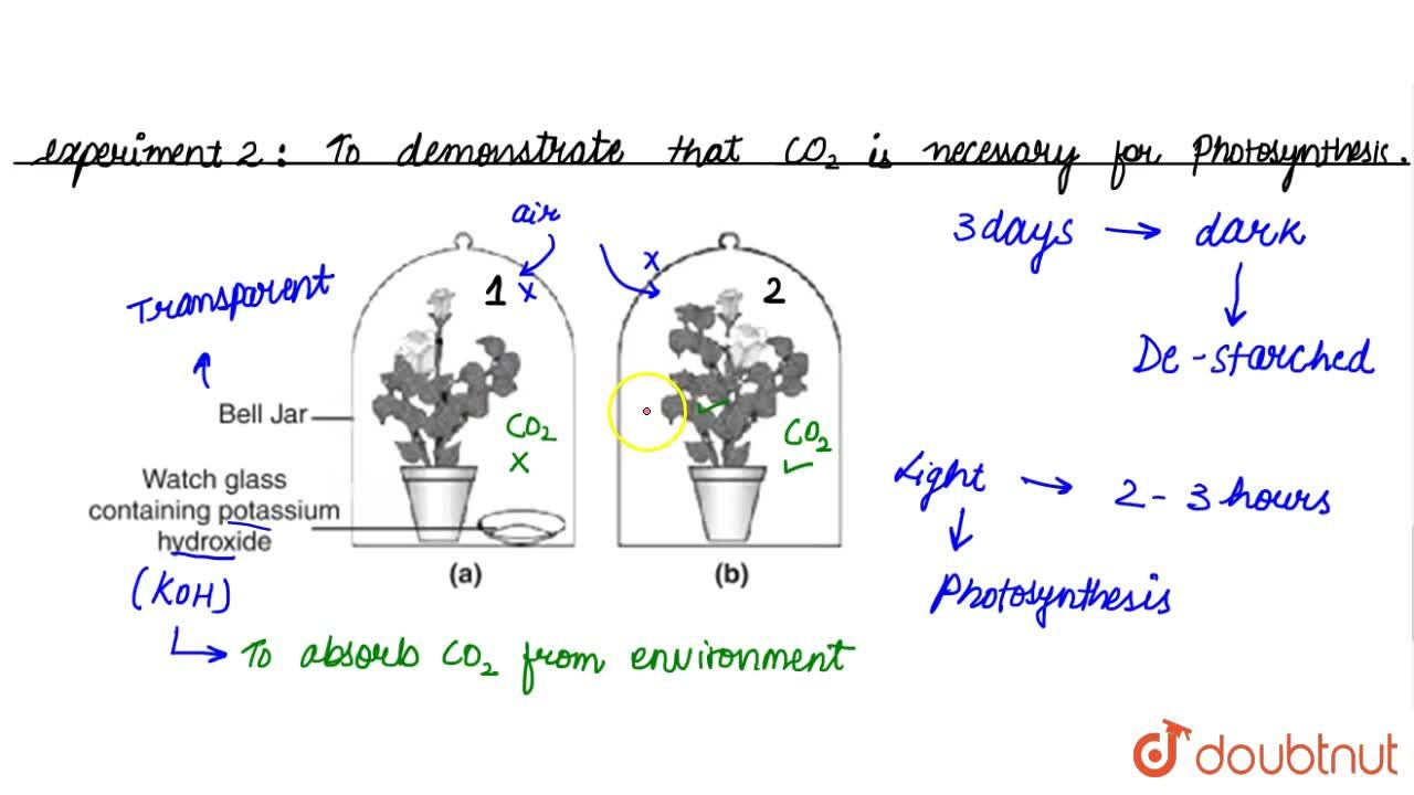 Solution for Experiments To Observe Photosynthesis