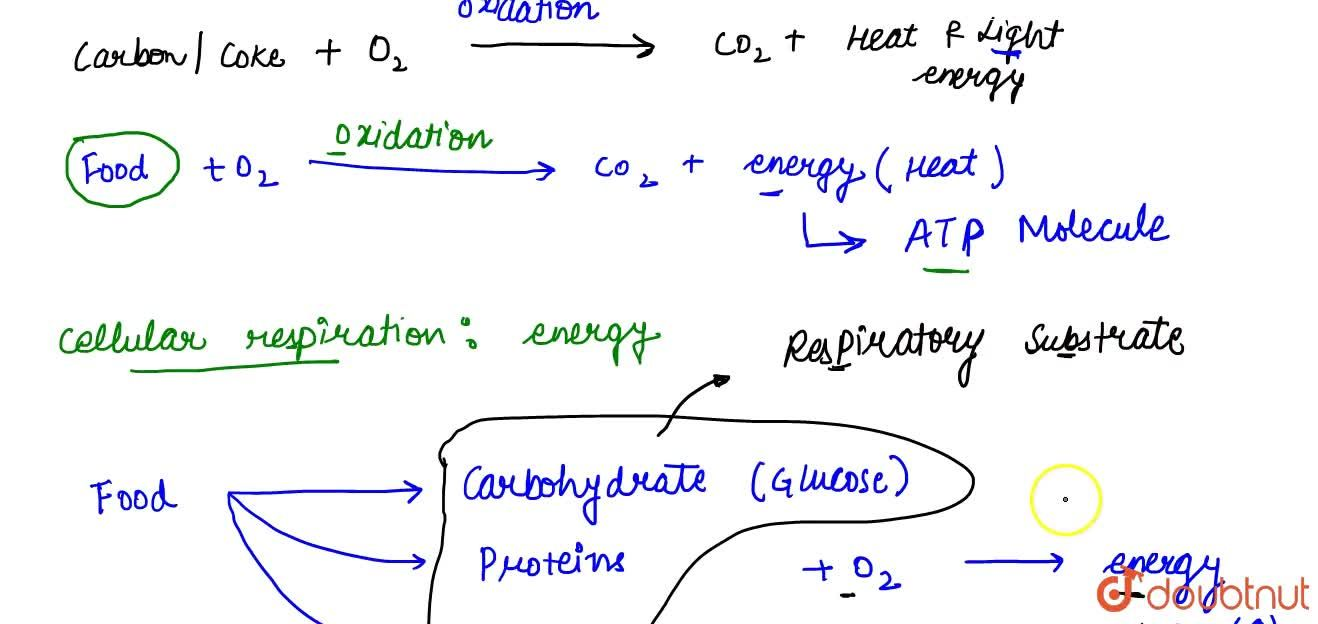 Solution for Introduction To Respiration