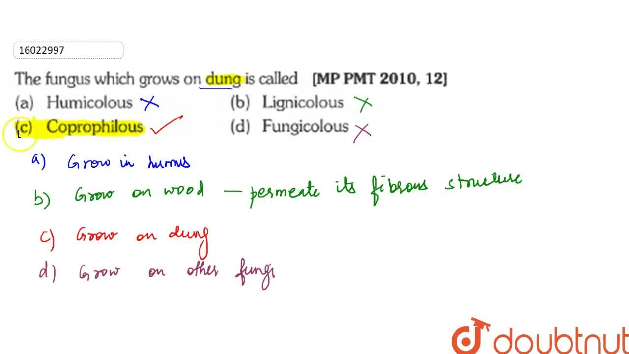 Solution for The fungus which grows on dungs is called