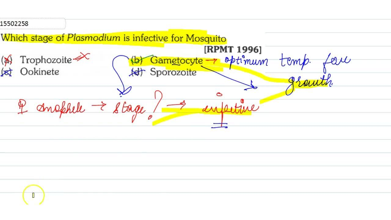 Solution for Which stage of Plasmodium is infective for Mosquit