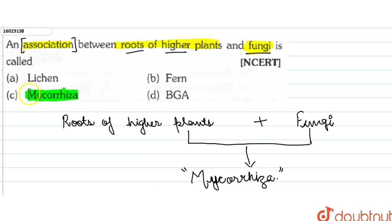 Solution for An association between roots f higher plants and f
