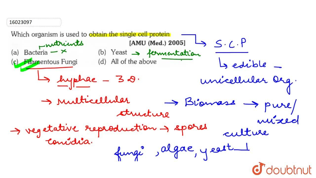 Which organism is used to obtain the single cell protein