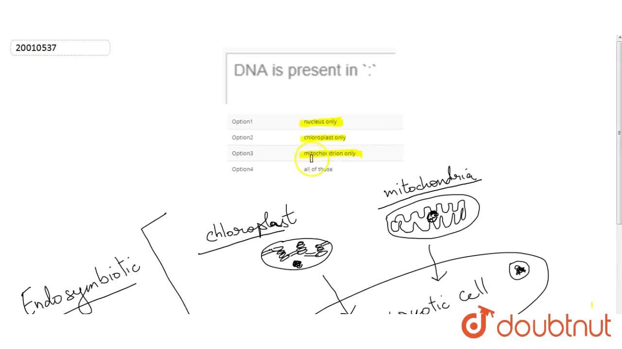 Solution for DNA is present in :