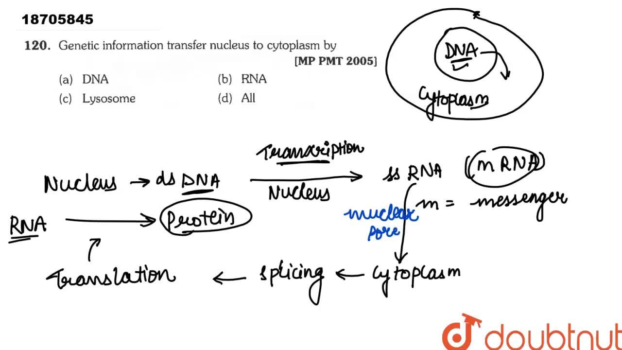 Solution for Genetic information transfer nucleus to cytoplasm