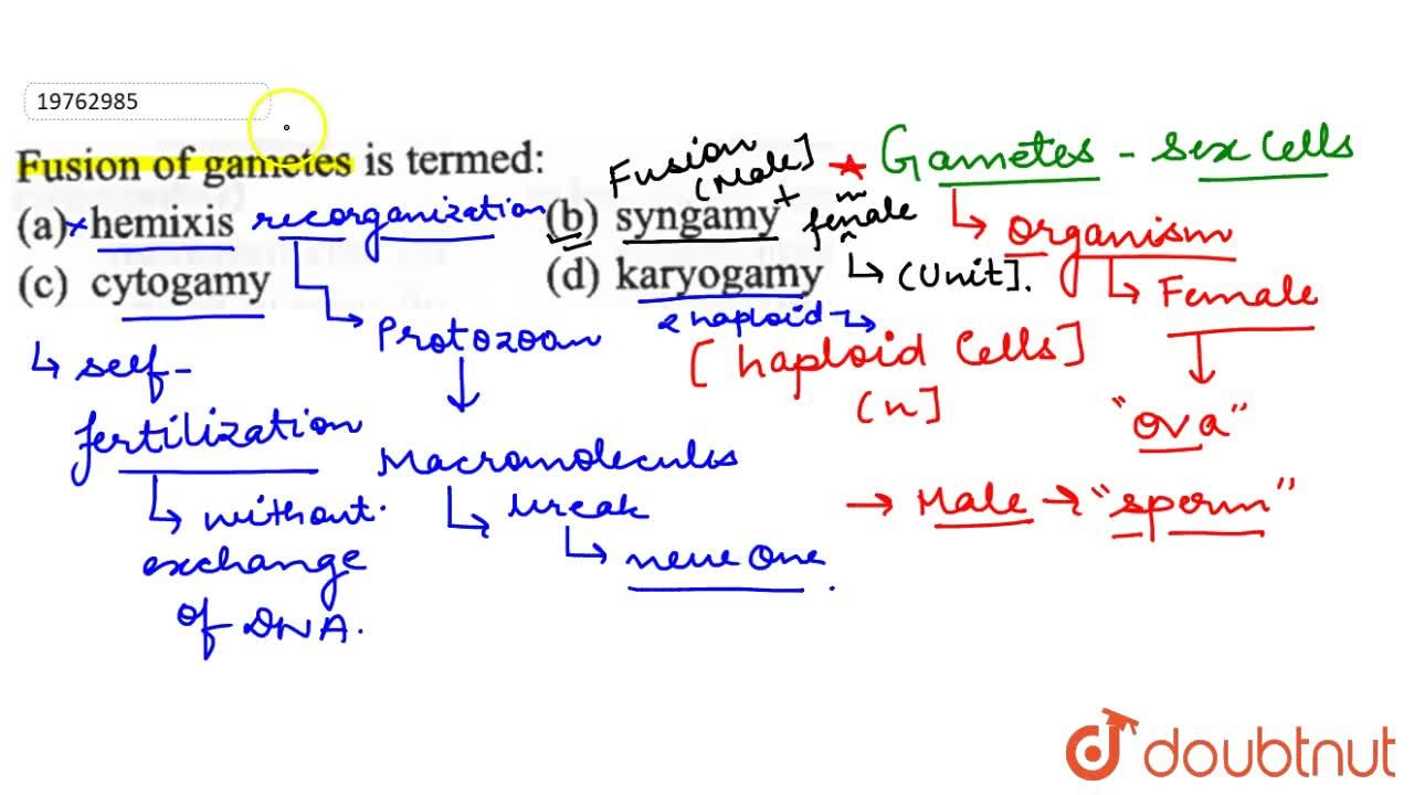 Solution for Fusion  of gametes  is  termed :