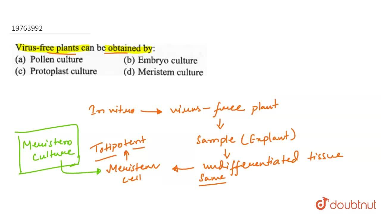 Solution for Virus-free plants can be obtained by: