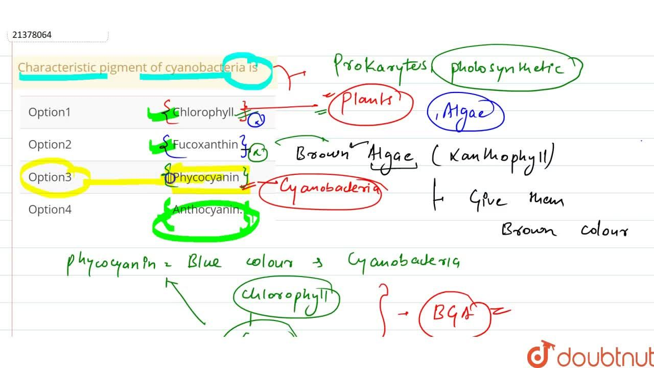 Solution for Characteristic pigment of cyanobacteria is