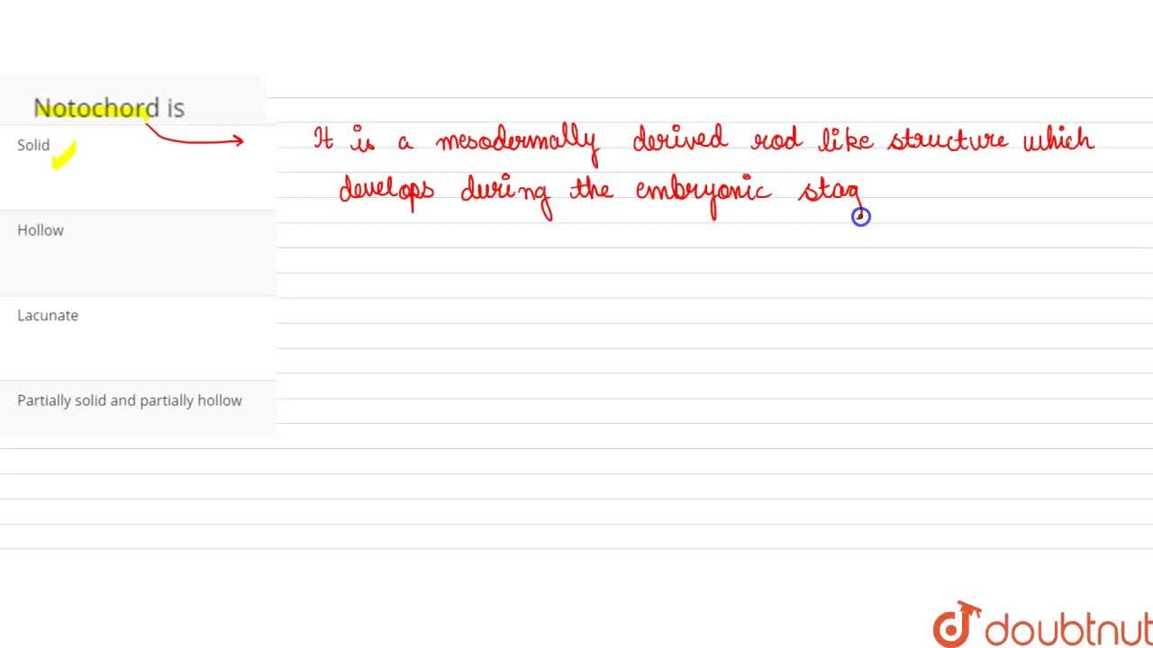 Solution for Notochord is