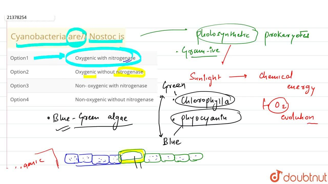 Solution for Cyanobacteria are,, Nostoc is