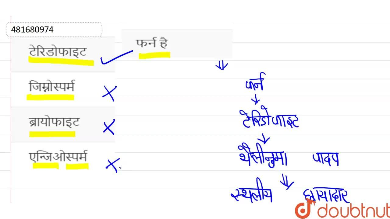 Solution for फर्न है
