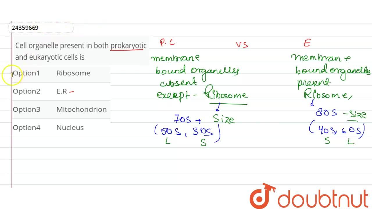 Solution for Cell organelle present in both prokaryotic and euk