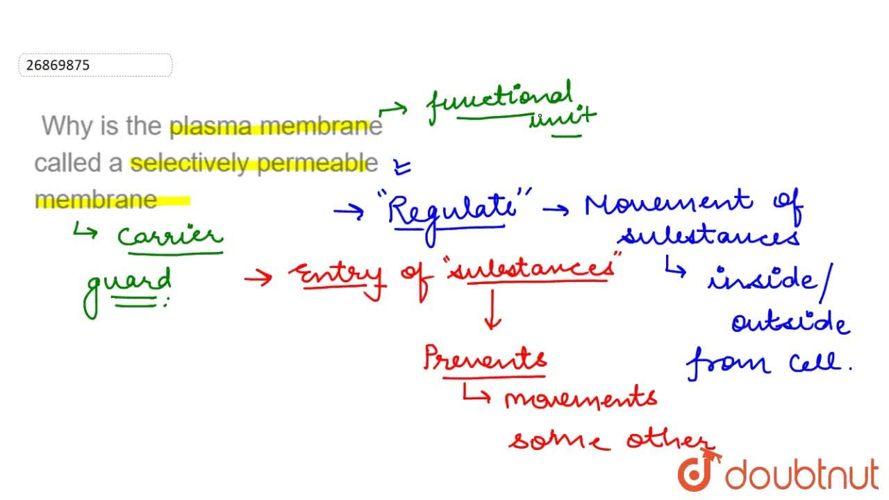 Why is the plasma membrane called a selectively permeable membrane