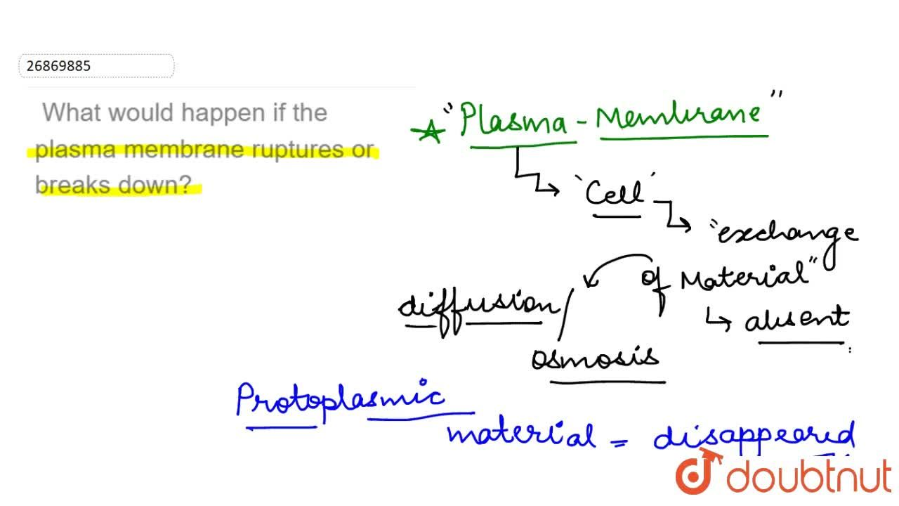 What would happen if the plasma membrane ruptures or breaks down?