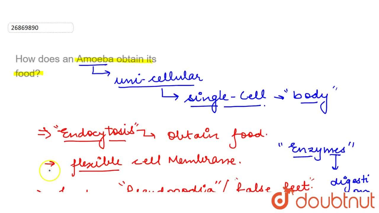 Solution for How does an Amoeba obtain its food?