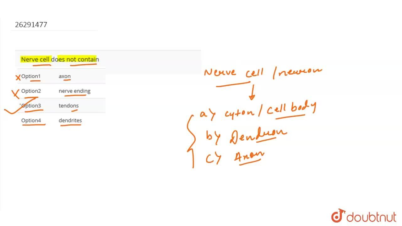 Solution for Nerve cell does not contain