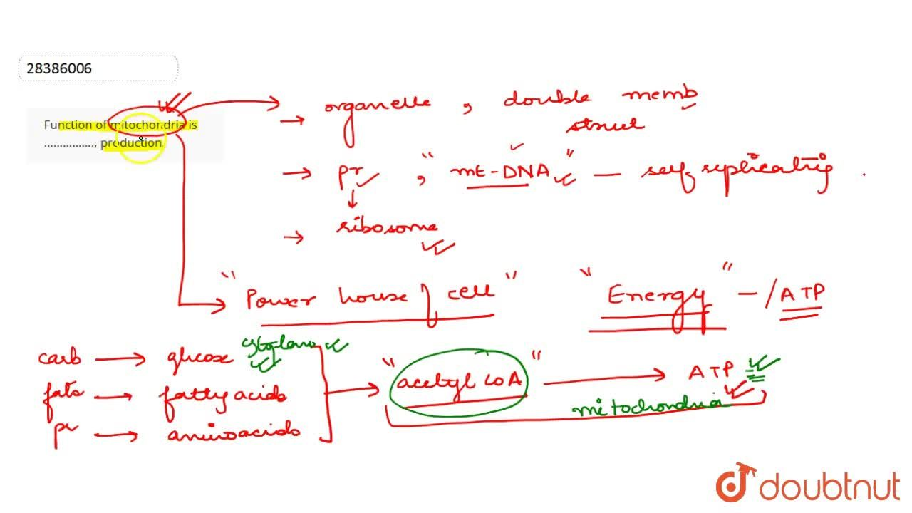 Solution for Function of mitochondria is ……………., production.